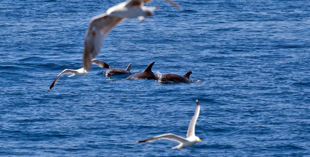 Dolphins_Island_Krk