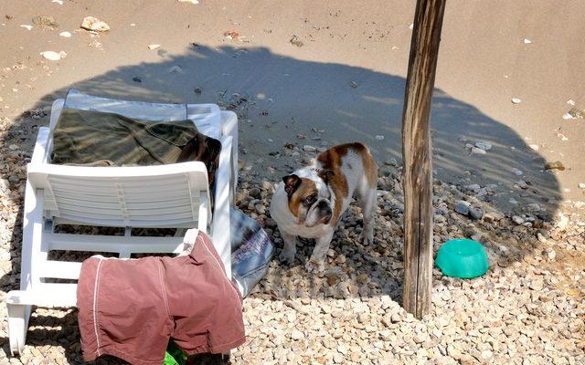 doggie-beach-baska