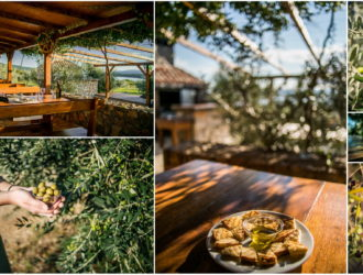 olive_tasting_island_krk